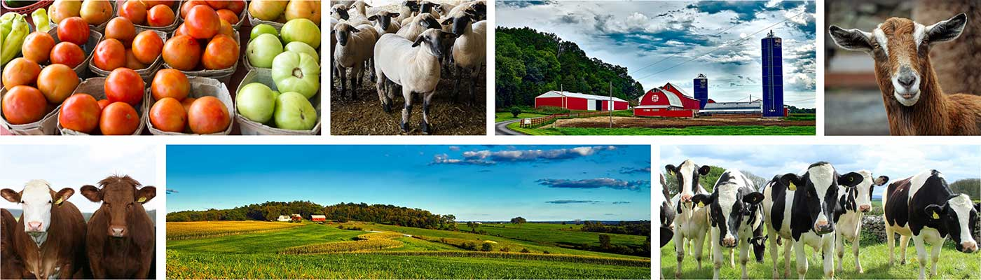 Image collage of vegetables, goats, cows, and farms.